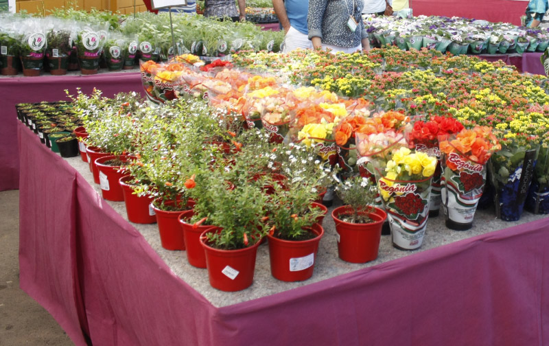 vendas de flores e plantas Enflor