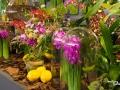 rua-das-flores-3736