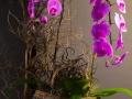 rua-das-flores-3750