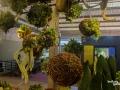 rua-das-flores-3770
