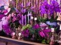 rua-das-flores-3783