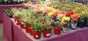 Venda de Flores e Plantas