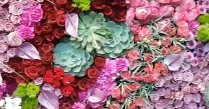 Enflor Garden Fair 2018 – Criatividade, beleza, inovação e muitas cores e para você